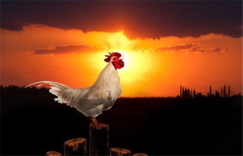 牝鸡司晨是什么意思,故事来源是什么?